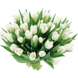 Тюльпаны белые.